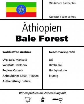 Äthiopien Bale Forest - natural